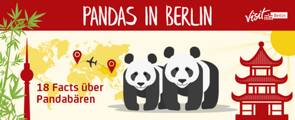 Pandas in Berlin, die Infografik: 18 Fun Facts über Pandabären