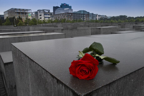 Rose on the Memorial to the Murdered Jews of Europe in Berlin