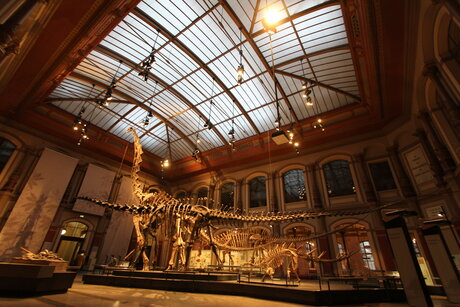 Big hall of Museum of Natural History