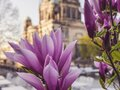 Rhododendrons bloom at the Berlin Cathedral