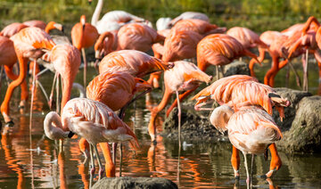 Flamingos in Tierpark Berlin in autumn
