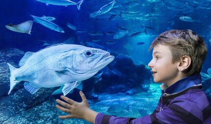 AquaDom and SEA LIFE - Attraction in Berlin